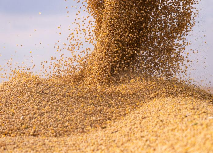 Wibest – Brazilian: Soybeans.
