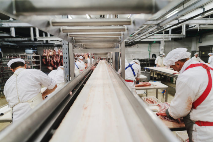 Wibest – Pig: Pork manufacturing facility and its workers.